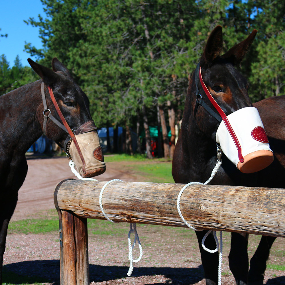 Mules eating from a feedbags