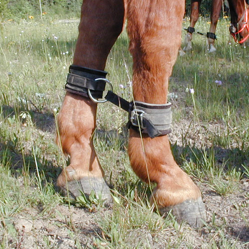 Horse hobbles allow you to graze your horse or mule in the backcountry with security.