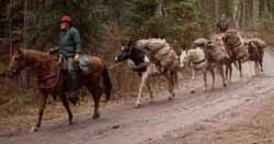 Roland Cheek leading a string of great trail horses at the Beaver Creek Trail Head.