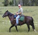 A good trail horse is worth his weight in gold.